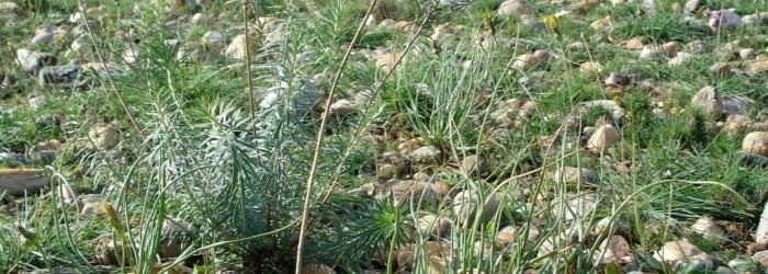 Les prairies substeppiques de Crau ©ARPE PACA