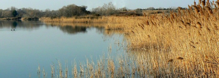 L'étang des Aulnes ©ARPE PACA