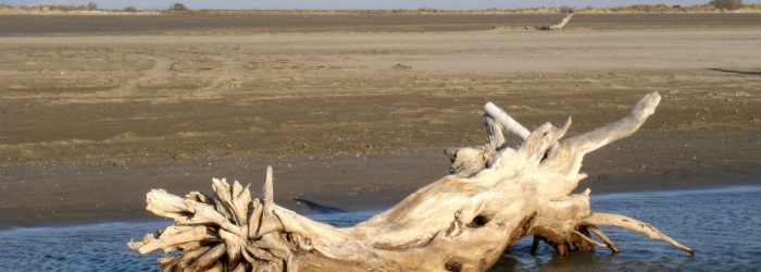Paysage littoral camarguais - Copyright : ARPE PACA