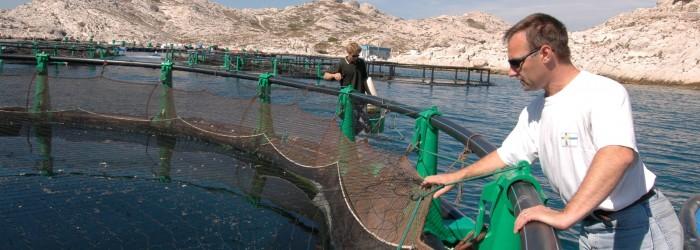 L'aquaculture autour du Frioul (13), 2006 - Copyright : GARUFI/Région PACA