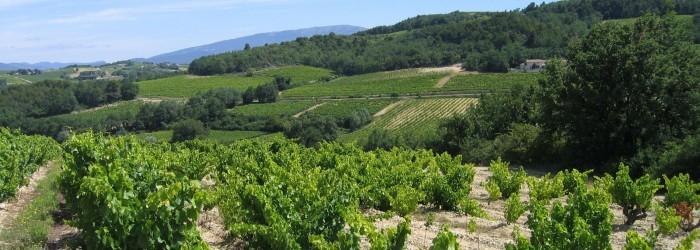 Enherbement vignes BV d'Hérin ©V. MAYEN/Agence de l'Eau RMC