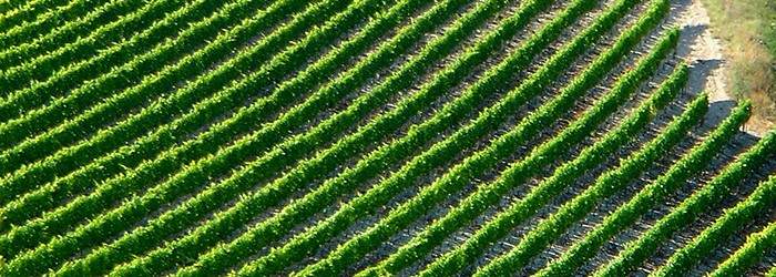 La viticulture ©ARPE